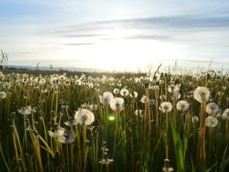 Aplicaciones de la homeopatía para combatir las alergias