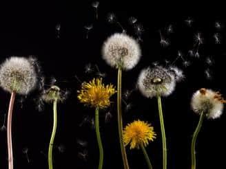 Tipos de alergias comunes en niños y cómo tratarlas
