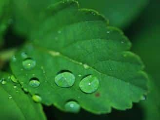 macronutrientes de las plantas