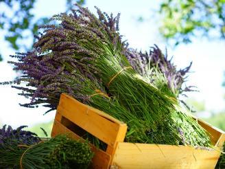 La importancia de la sensación olfativa en cosmética natural