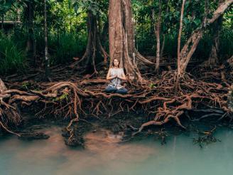 La metáfora del yoga como árbol