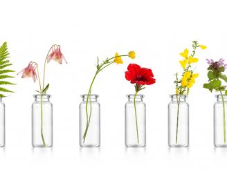 flores bach estado ánimo