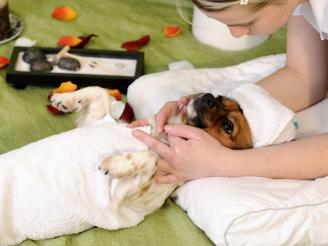 Aplicaciones de la Naturopatía para Mascotas